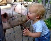 swine-kiss (1)