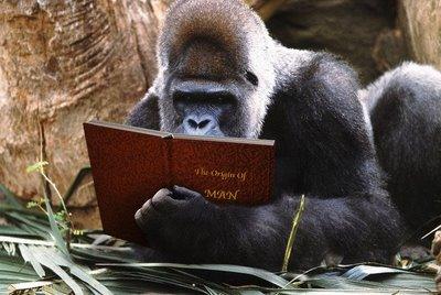 Gorilla origin of man